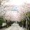 まだ間に合う!地元で楽しむ東大阪・桜の名所8選