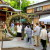 梶無神社に夏が来た!「茅の輪くぐり」斎行、アオバズクの巣立ちも間近