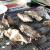 GWを先取り!フレスポ東大阪でプレミアムな牡蠣小屋を体験してきた