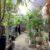 まるで楽園!観葉植物とカフェ「Leaves of grass」(リーブズオブグラス)